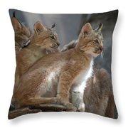 Lynx Trio Throw Pillow