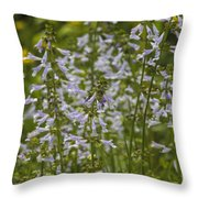 Lyreleaf Sage Wildflowers - Salvia Lyrata Throw Pillow