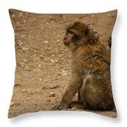 Macaque Monkeys Throw Pillow