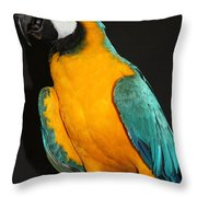 Macaw Hanging Out Throw Pillow