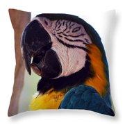 Macaw Head Study Throw Pillow