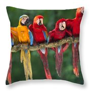 Macaws Throw Pillow