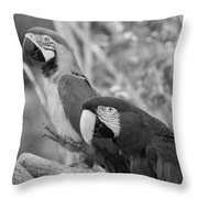 Macaws Of Color B W 14 Throw Pillow