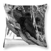 Macaws Of Color B W 15 Throw Pillow