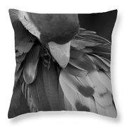 Macaws Of Color B W 16 Throw Pillow