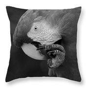 Macaws Of Color B W 18 Throw Pillow