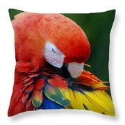 Macaws Of Color26 Throw Pillow