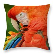 Macaws Of Color29 Throw Pillow