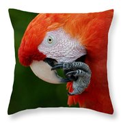 Macaws Of Color32 Throw Pillow