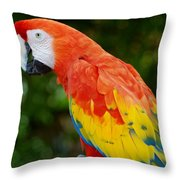 Macaws Of Color33 Throw Pillow
