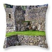 Machu Picchu - Grazing Lamas Throw Pillow
