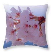 Macro Dc Cherry Blossoms Throw Pillow
