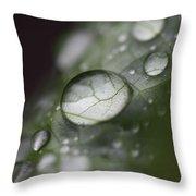 Macro Dew Drop Throw Pillow