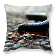 Macro  Millipede Throw Pillow