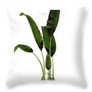 Macrotaeniopteris Prehistoric Plant Throw Pillow