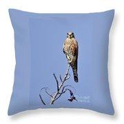 Madagascar Kestrel Throw Pillow