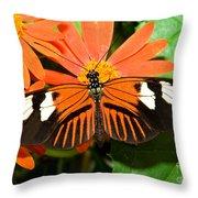 Madeira Butterfly Throw Pillow