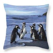 Magellanic Penguin Trio On Beach Throw Pillow
