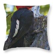 Magellanic Woodpecker Throw Pillow