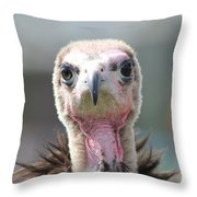 Maggee The Hooded Vulture Throw Pillow