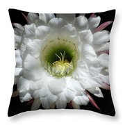 Magic Of The Night Throw Pillow