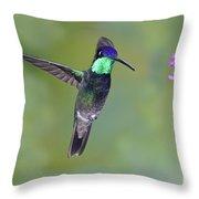 Magnificant Hummingbird Throw Pillow