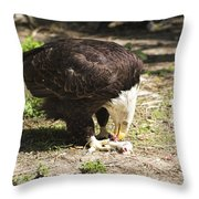 Magnificent Bald Eagle Breakfast Throw Pillow