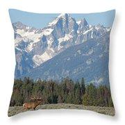 Magnificent Elk Throw Pillow