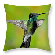 Magnificent Hummingbird Throw Pillow
