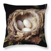 Magnificent Hummingbird Eggs Throw Pillow