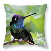 Magnificent Hummingibrd Male Throw Pillow