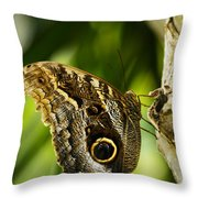 Magnificent Owl Butterfly Throw Pillow