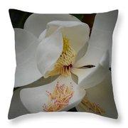 Magnolia 14-3 Throw Pillow