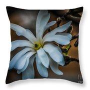 Magnolia Tree Blossum Throw Pillow