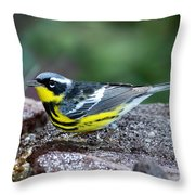 Magnolia Warbler Dendroica Magnolia Throw Pillow