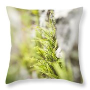 Maiden-hair Spleenwort Throw Pillow