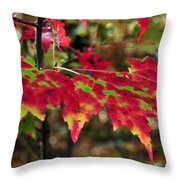maine 37 Maple Leaf Fall Foliage Throw Pillow