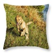 Maisie - Boundless Energy Throw Pillow