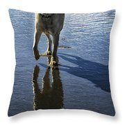 Maisie At The Beach Throw Pillow