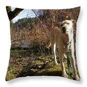 Maisie On A Rock Throw Pillow