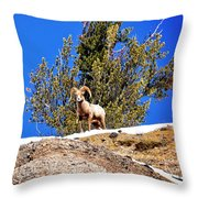 Majestic Big Horn Sheep Throw Pillow