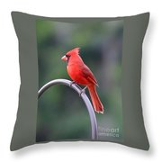 Majestic Cardinal Throw Pillow