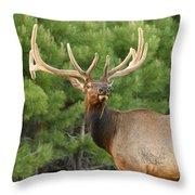 Majestic Elk Throw Pillow
