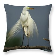 Majestic Great Egret Throw Pillow