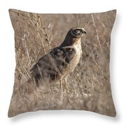 Majestic Harrier Throw Pillow