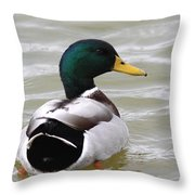 Majestic Mallard - Duck Throw Pillow