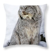 Majestic Moment Throw Pillow by Inspired Nature Photography Fine Art Photography