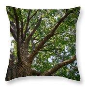 Majestic Oak Throw Pillow