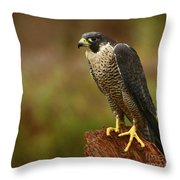 Majestic Peregrine Falcon In The Rain Throw Pillow by Inspired Nature Photography Fine Art Photography