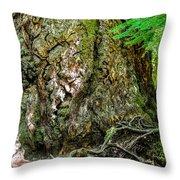 Majestic Spirit Collection 1 Throw Pillow